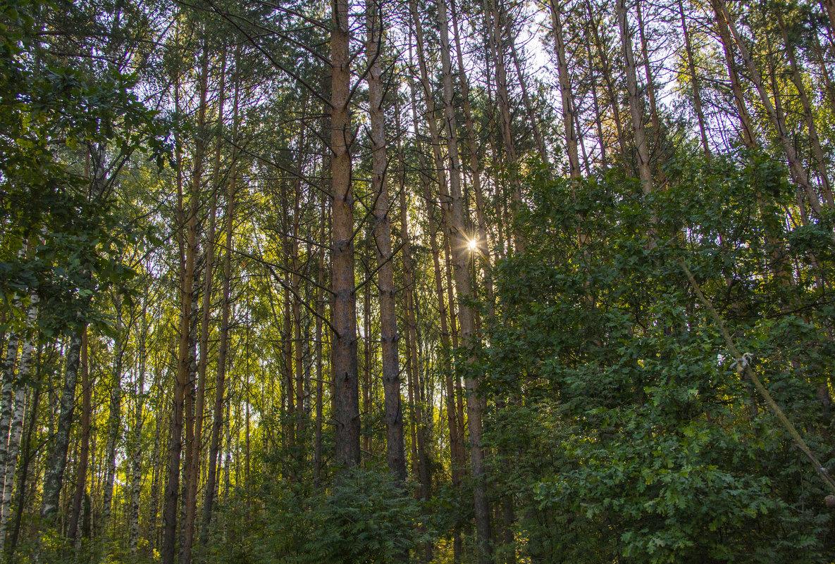 Солнечный лес - Надежда Чернышева