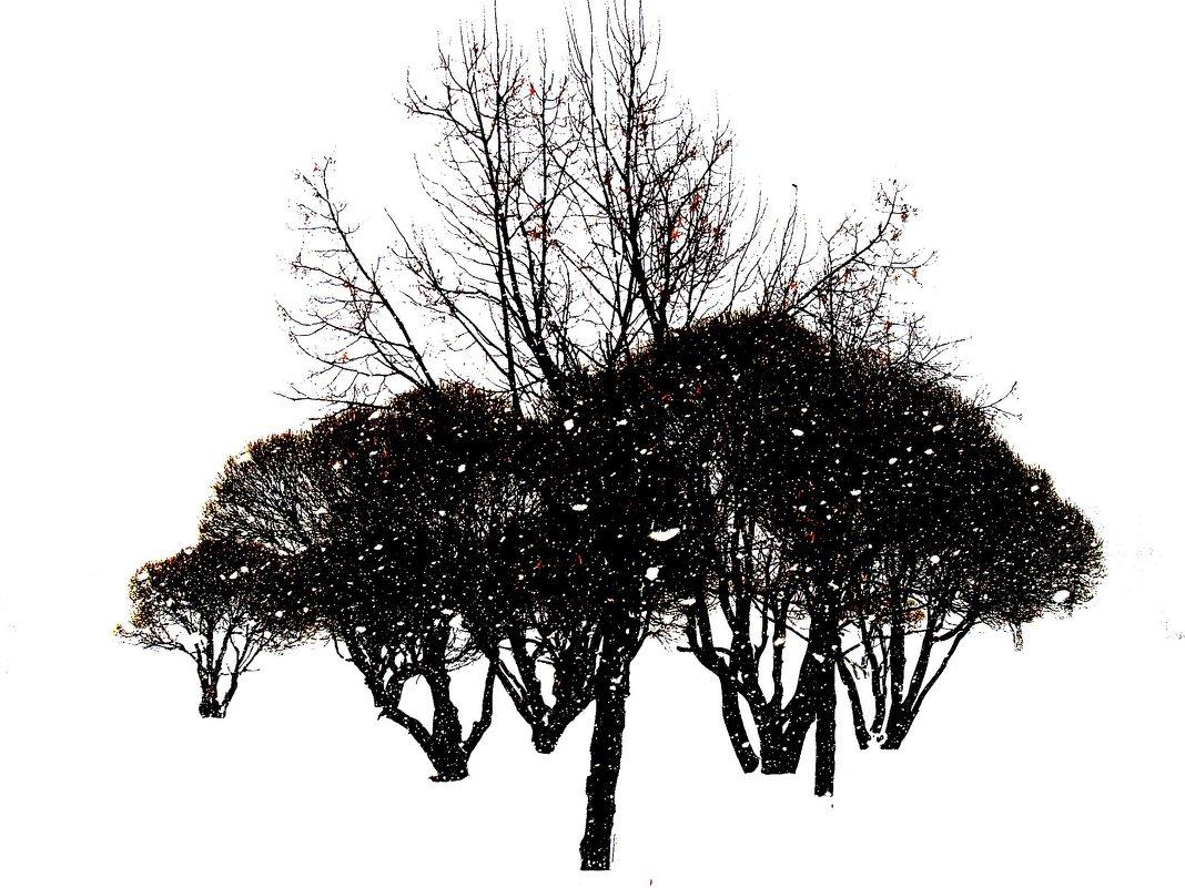 Зимняя графика - Tanja Gerster