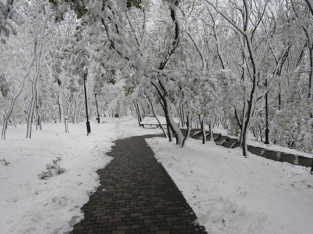Зима в парках. - Вячеслав Медведев