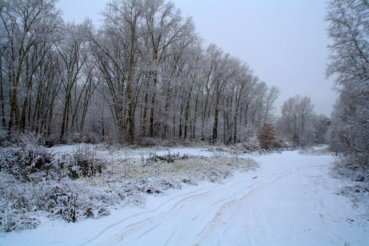 в зимнем лесу - Наталья Сазонова
