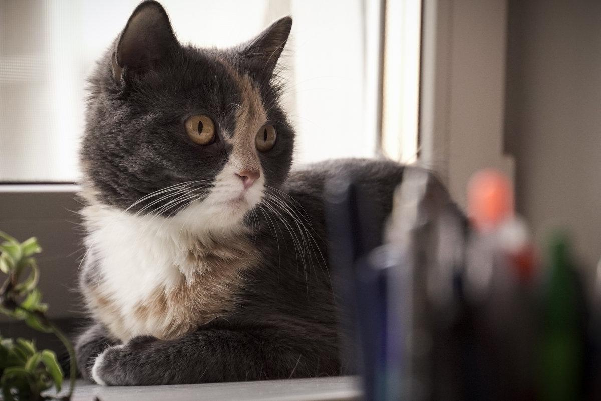 Кошка - Илья