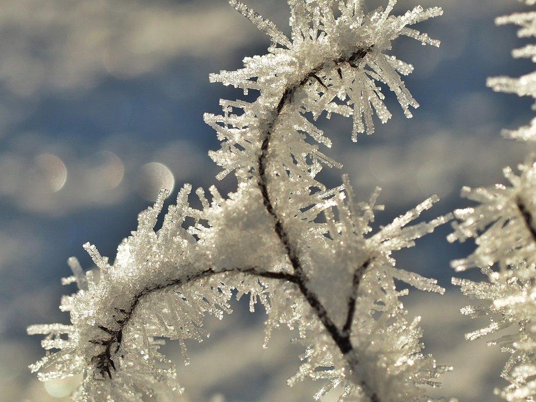 Зимний букет - Swetlana V