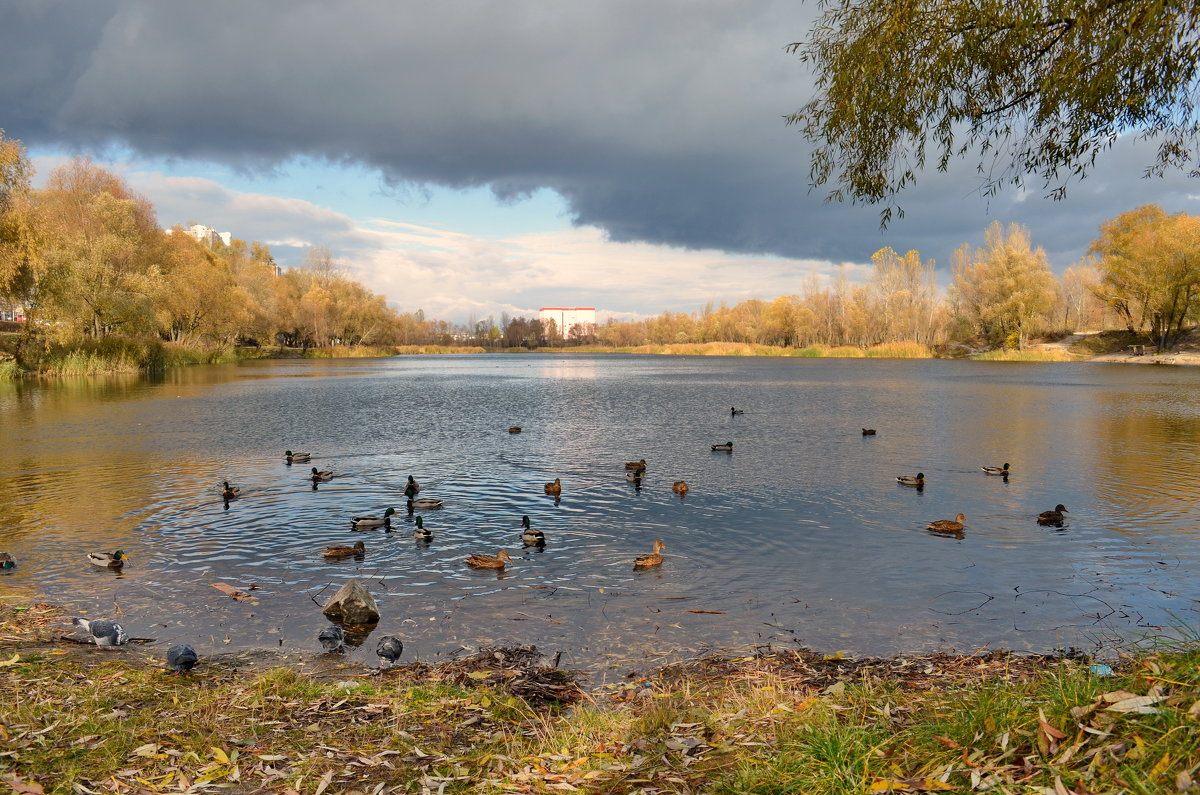 Озеро в спальном районе - Валентина Данилова