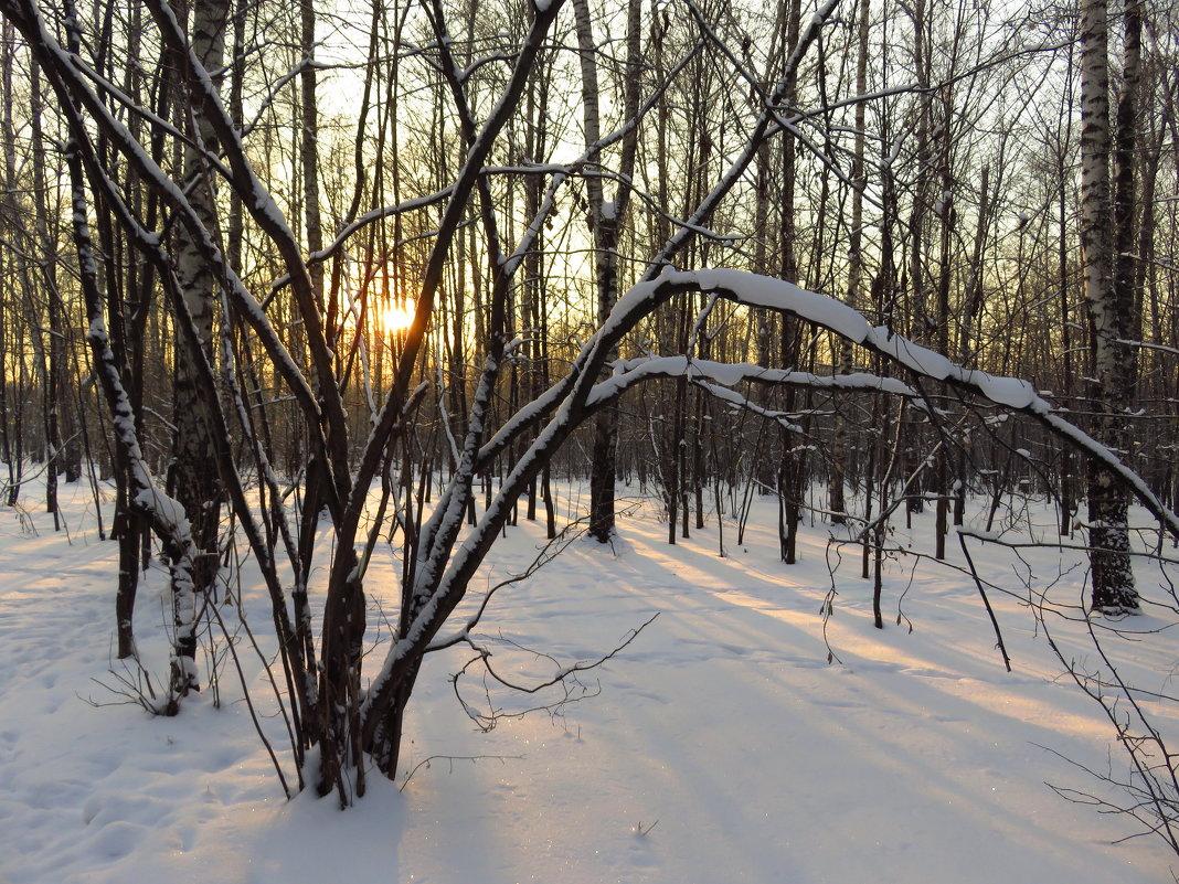 Мороз и солнце, день чудесный! - Андрей Лукьянов