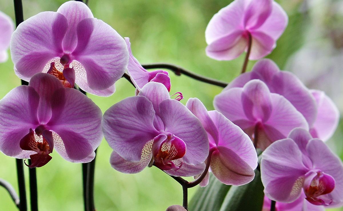 У окна - Виолетта