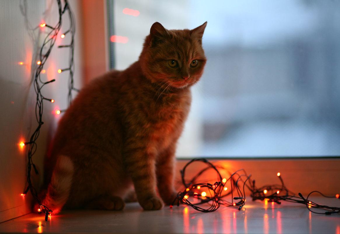 кот рождественский - майя *