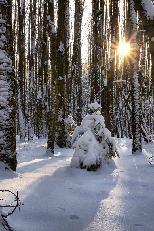 Зима пришла - Юрий Кольцов