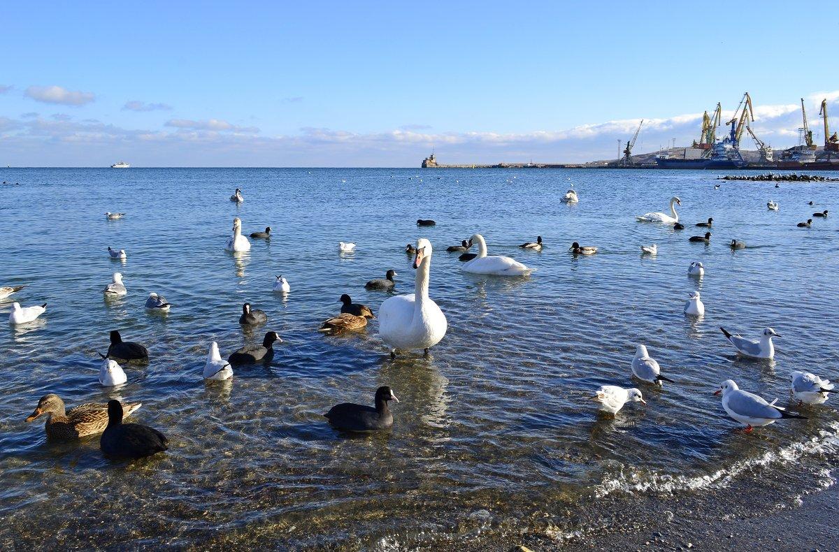 Птицы в Феодосии - Виктор Шандыбин