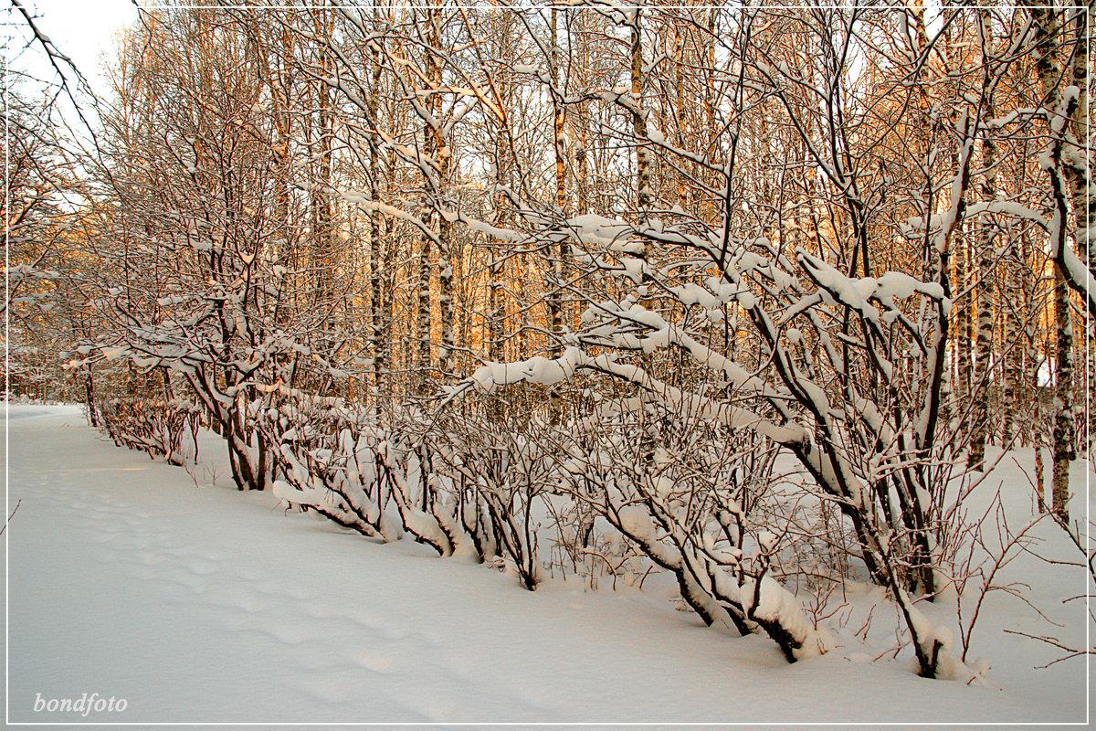 Зимняя сказка - Виктор Бондаренко