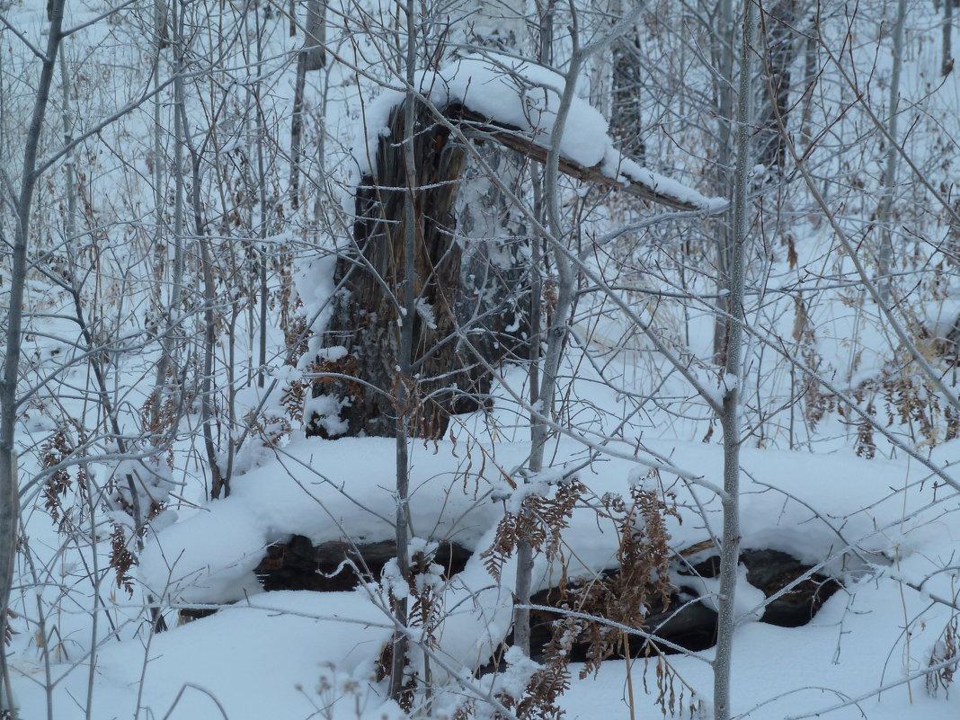 Зимой в лесу (гуси-лебеди) - Галина