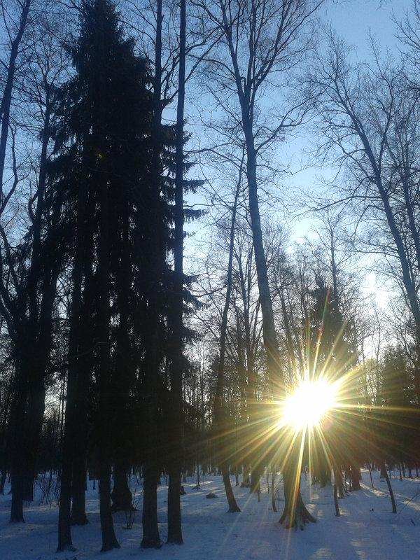 Солнечный пейзаж - Сапсан
