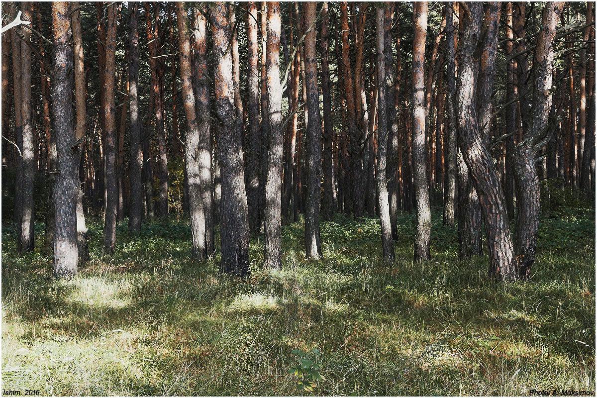 Деревья, освещенные солнцем - Александр Максимов