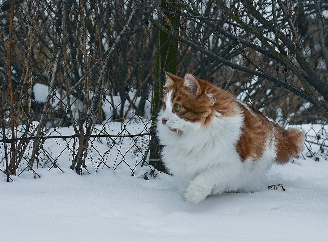По первому снегу... - Александр Бойко