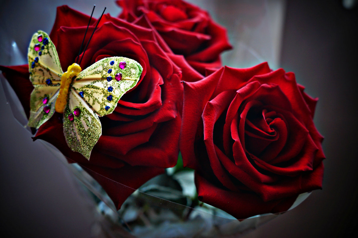 Розы - Оля Грязнова