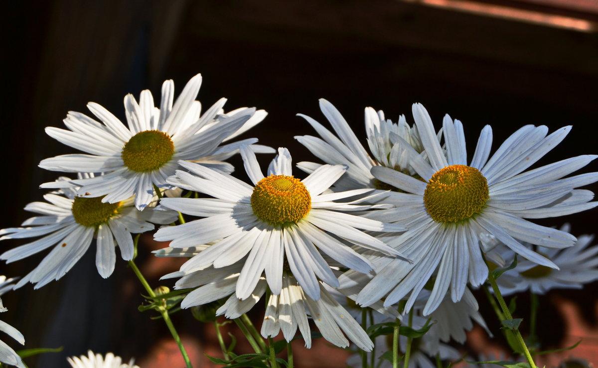 Цветы - Татьяна