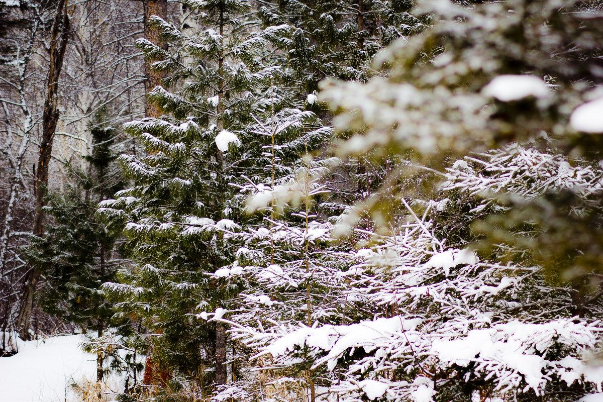 прогулка по зимнему лесу - Valery
