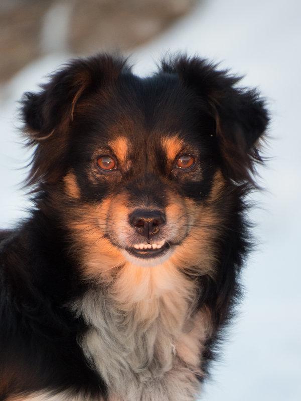 Собака - Ксения Репина