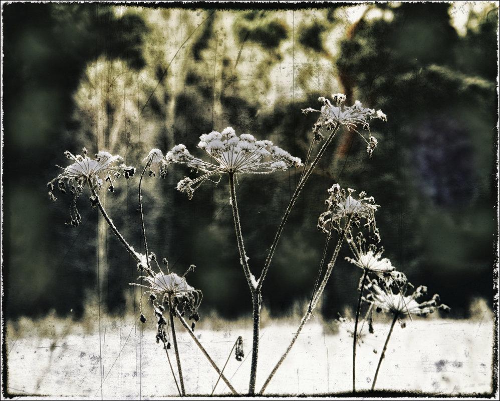 растительность - Виктор Сосунов