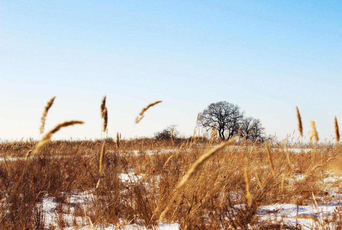 Зимнее поле - Елена Зудова