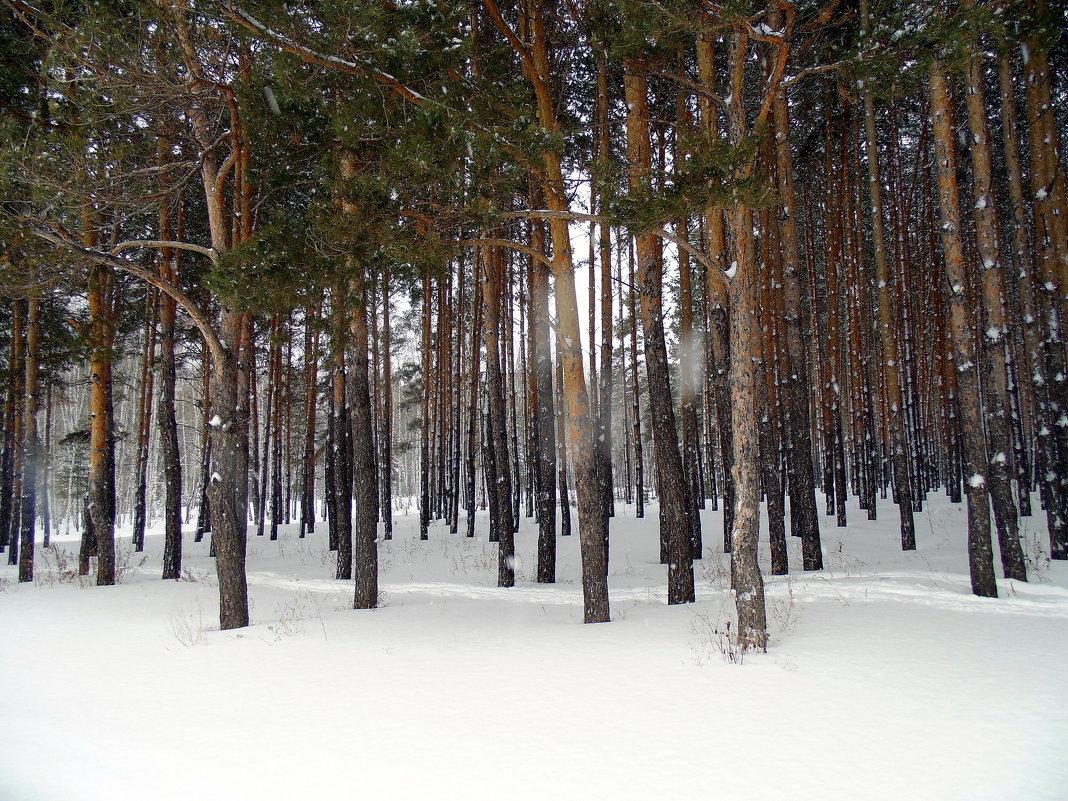 Зимний лес . - Мила Бовкун