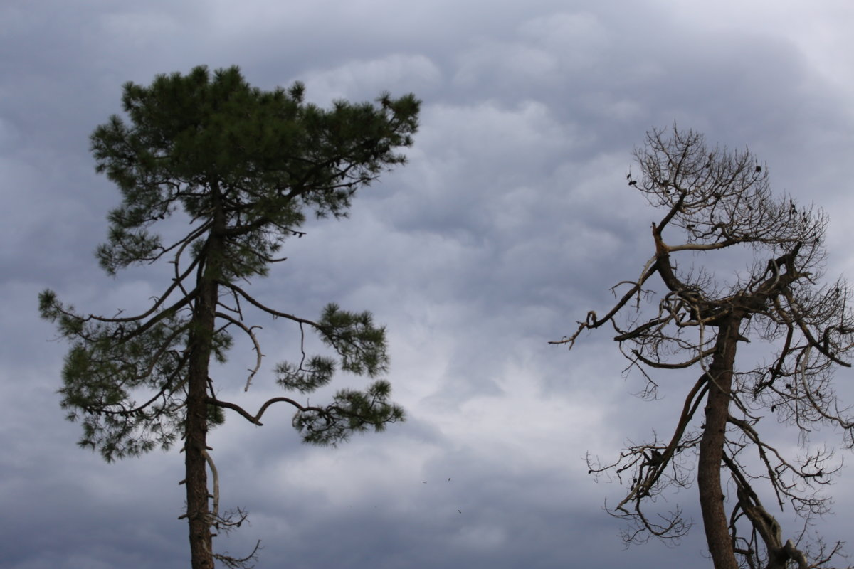 Два дерева - valeriy khlopunov