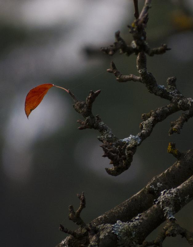 лист - Ксения Репина