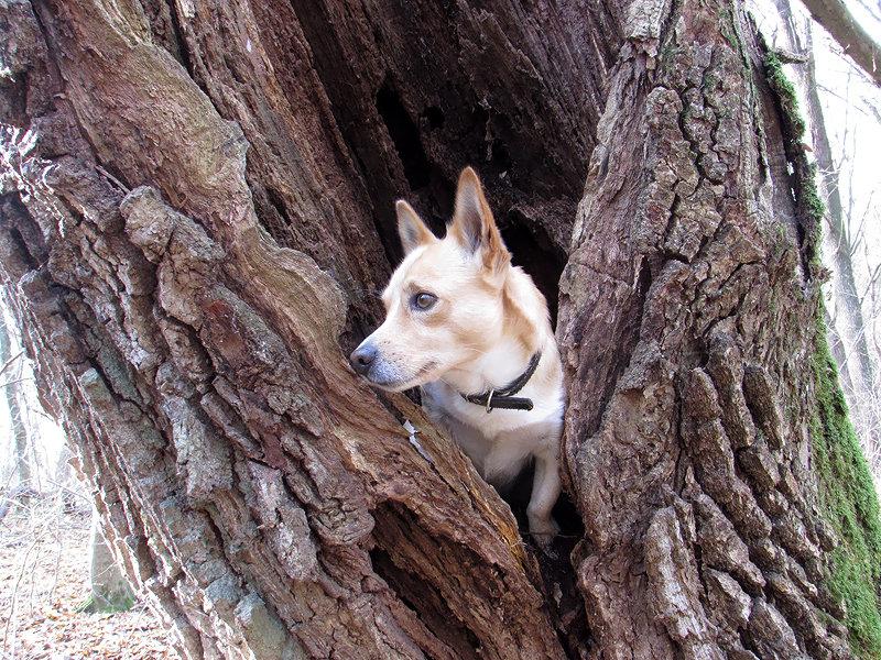 Топик в дубле дерева - Тоня Просова