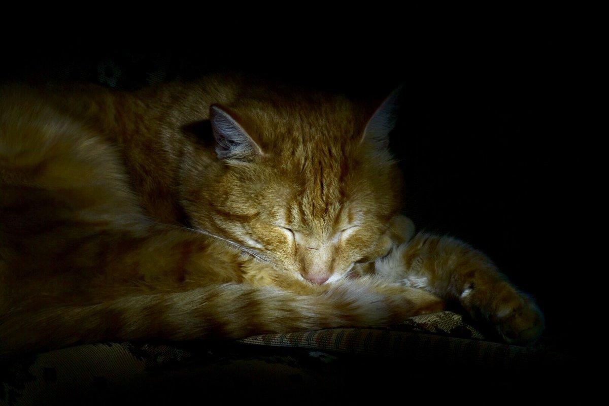 Спящий кот. - Марина