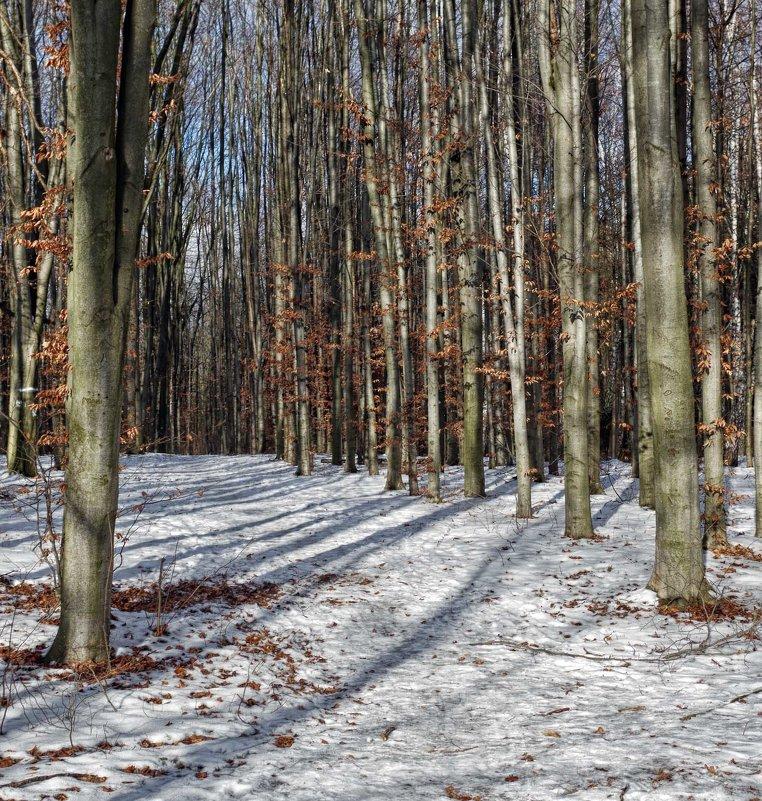 зима.грабовая посадка - юрий иванов