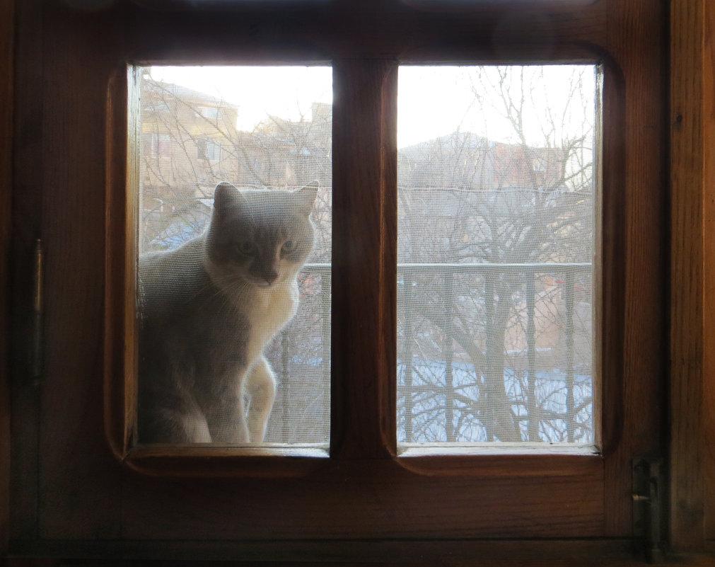 Домой хочется - Наталья (D.Nat@lia) Джикидзе (Берёзина)