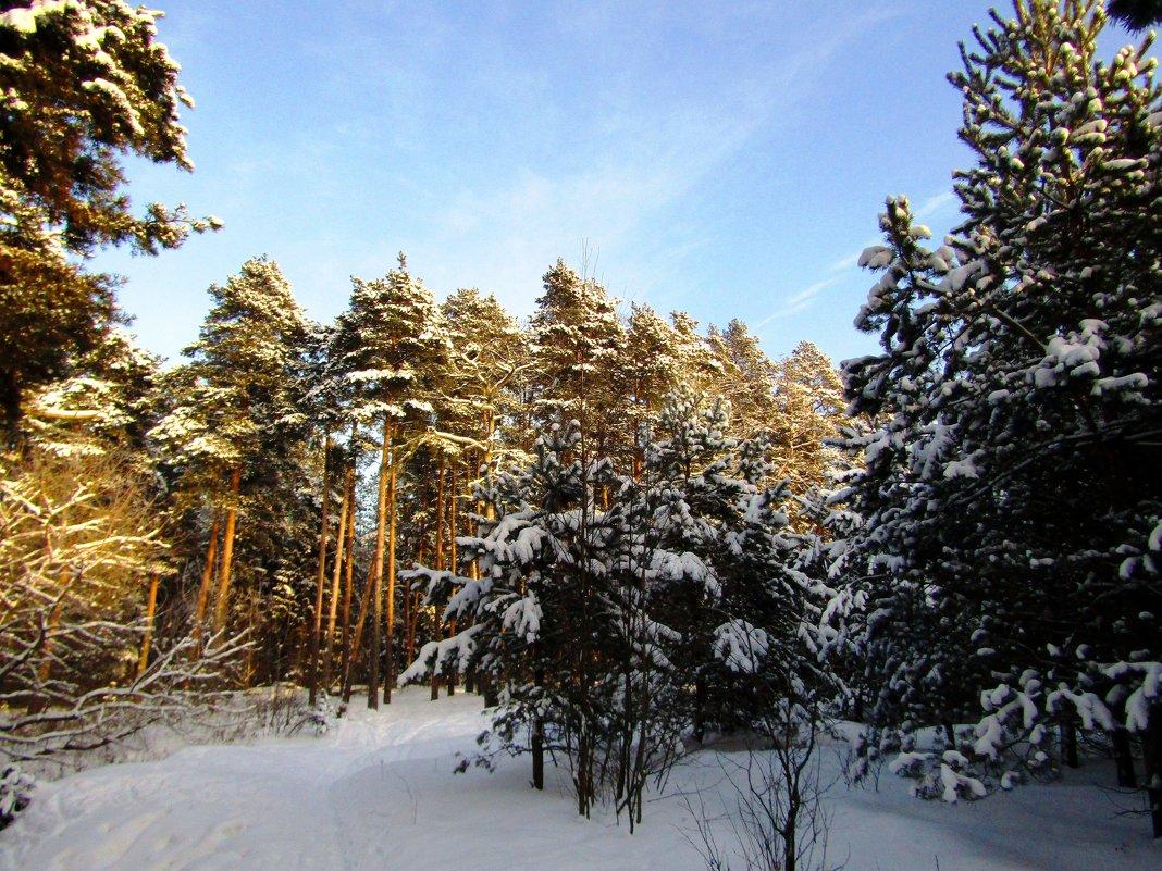 На зимней прогулке - Андрей Снегерёв