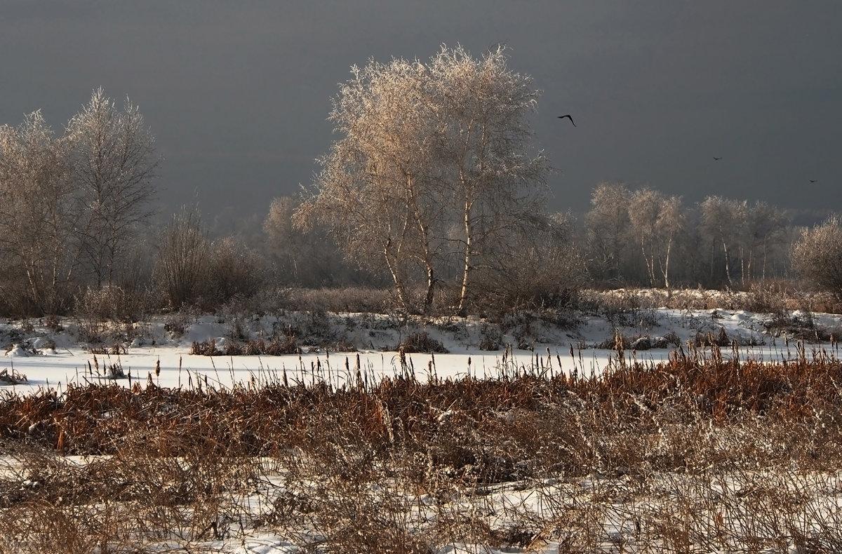 Замёрзли берёзки... - Александр Попов
