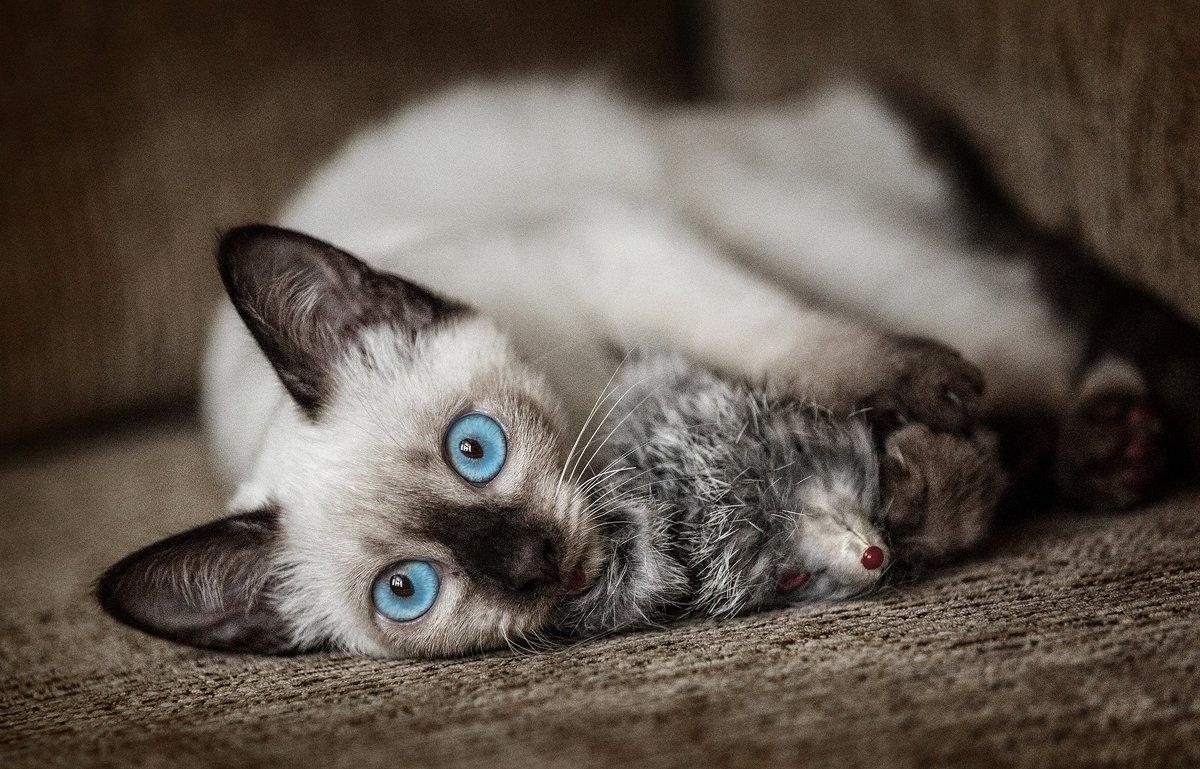 Эти глаза напротив... - Олег Князев