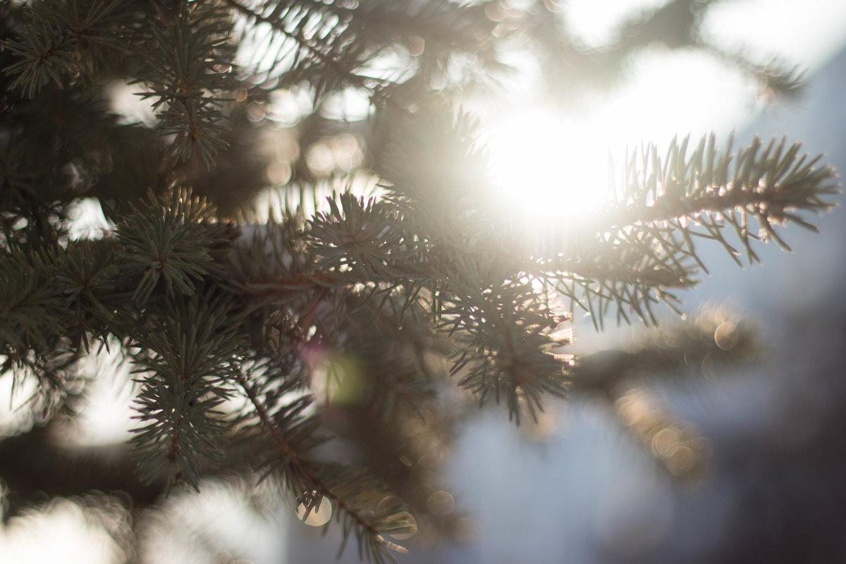 Зимнее солнце - Ирина Холодная