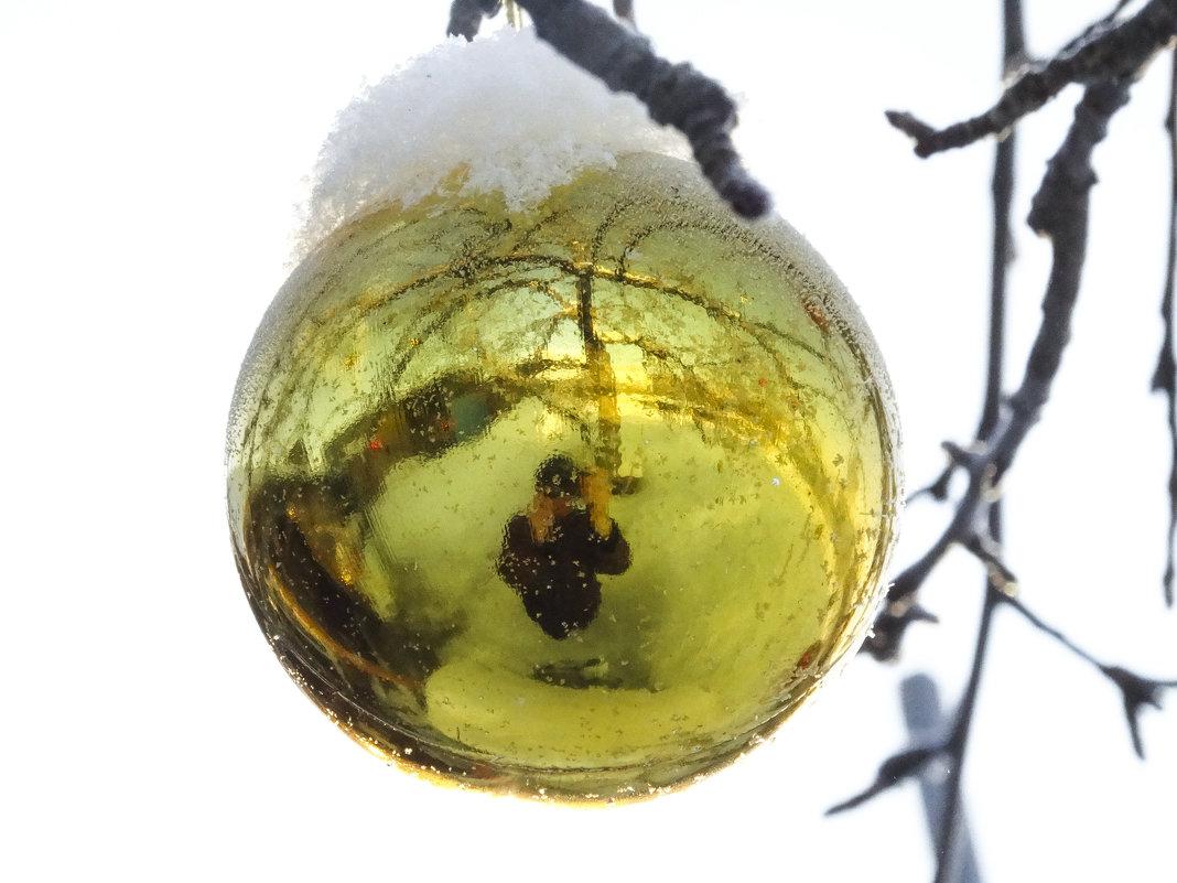 На яблоне в саду - Геннадий Г.