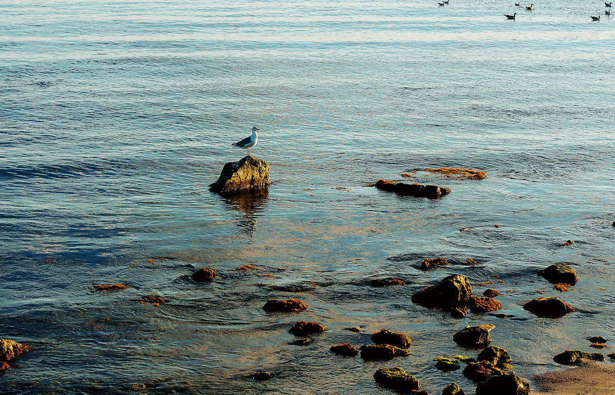 Море - Konstantin Margunov