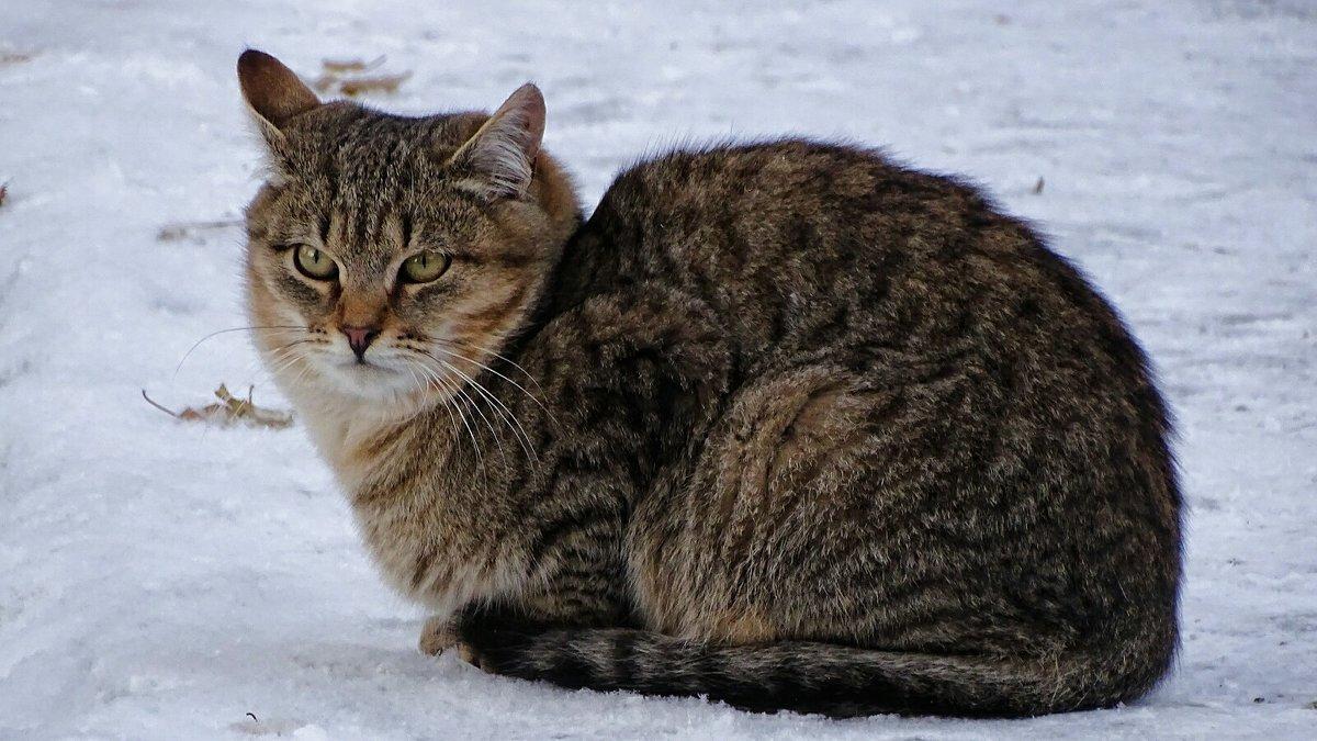 Бездомный кот - Милешкин Владимир Алексеевич