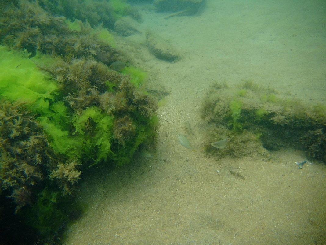 Отдых на море, Крым. Скнорлинг. Подводные пейзажи-67. - Руслан Грицунь