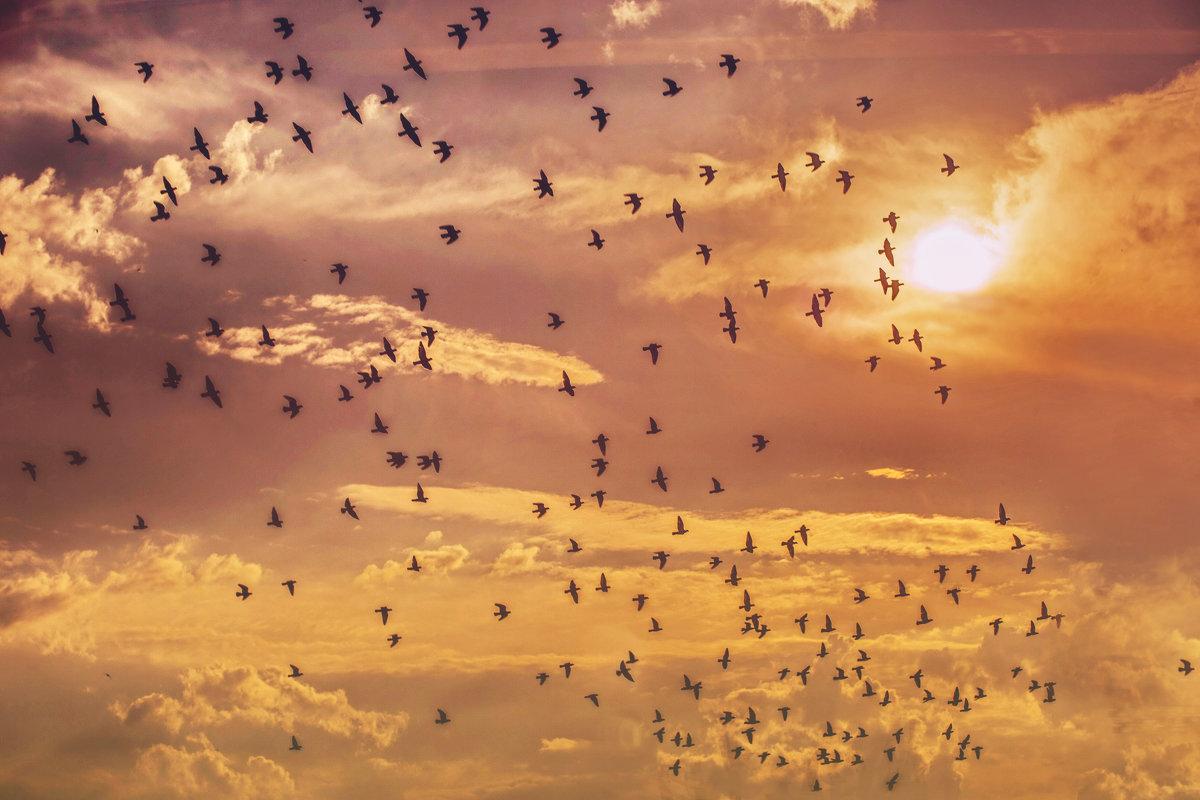 Летим к солнцу - Ирина Смирнова
