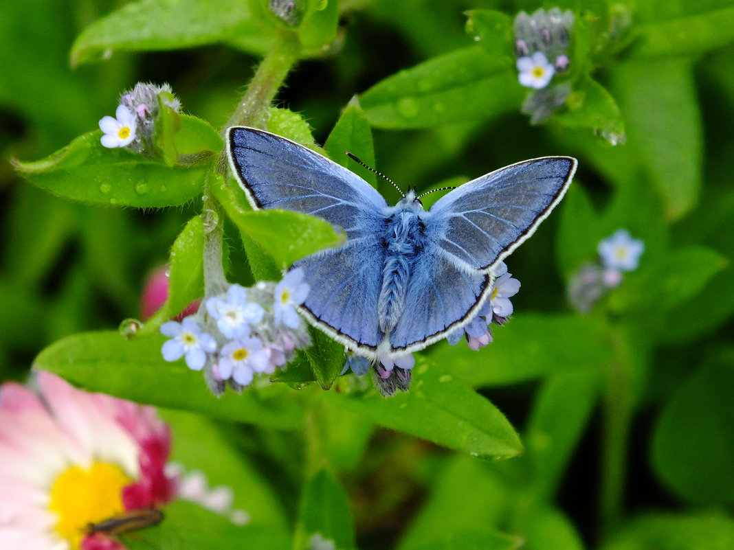 Мохнатая бабочка - Андрей Кротов