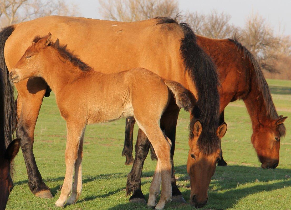 Дикие лошади - Андрей Щинов