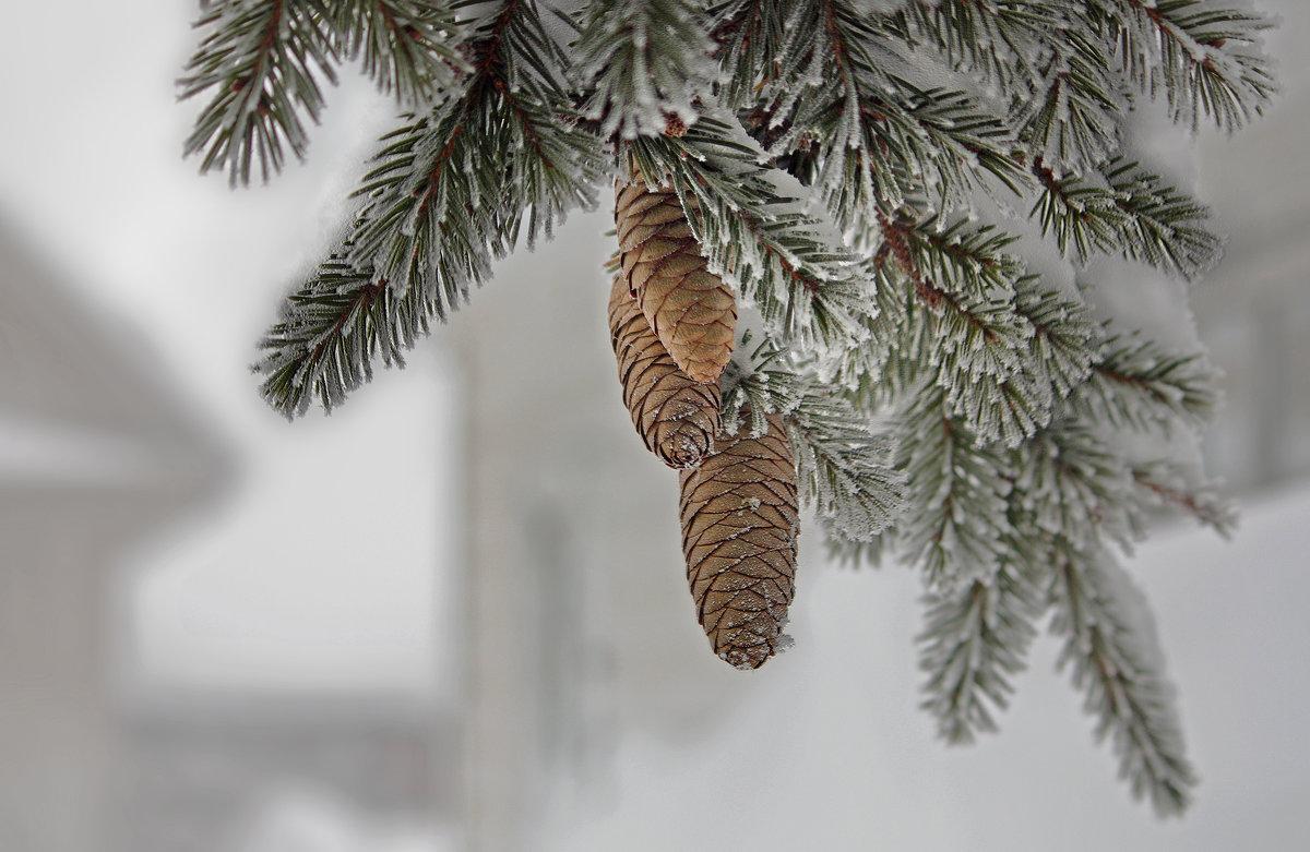 Январский подарок... 10 января - Olenka