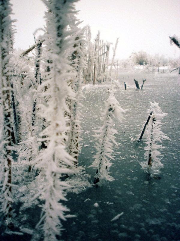 Замерзшие травинки - mAri