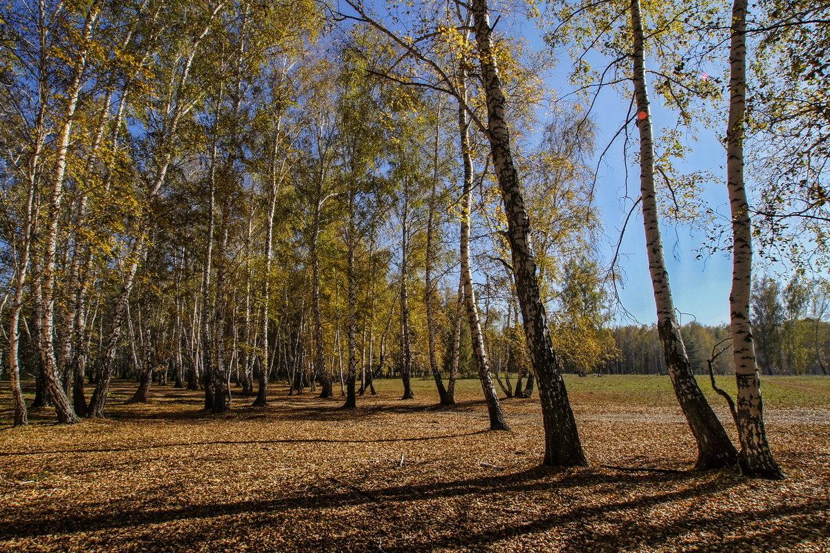Осенний денёк - Виктор Четошников