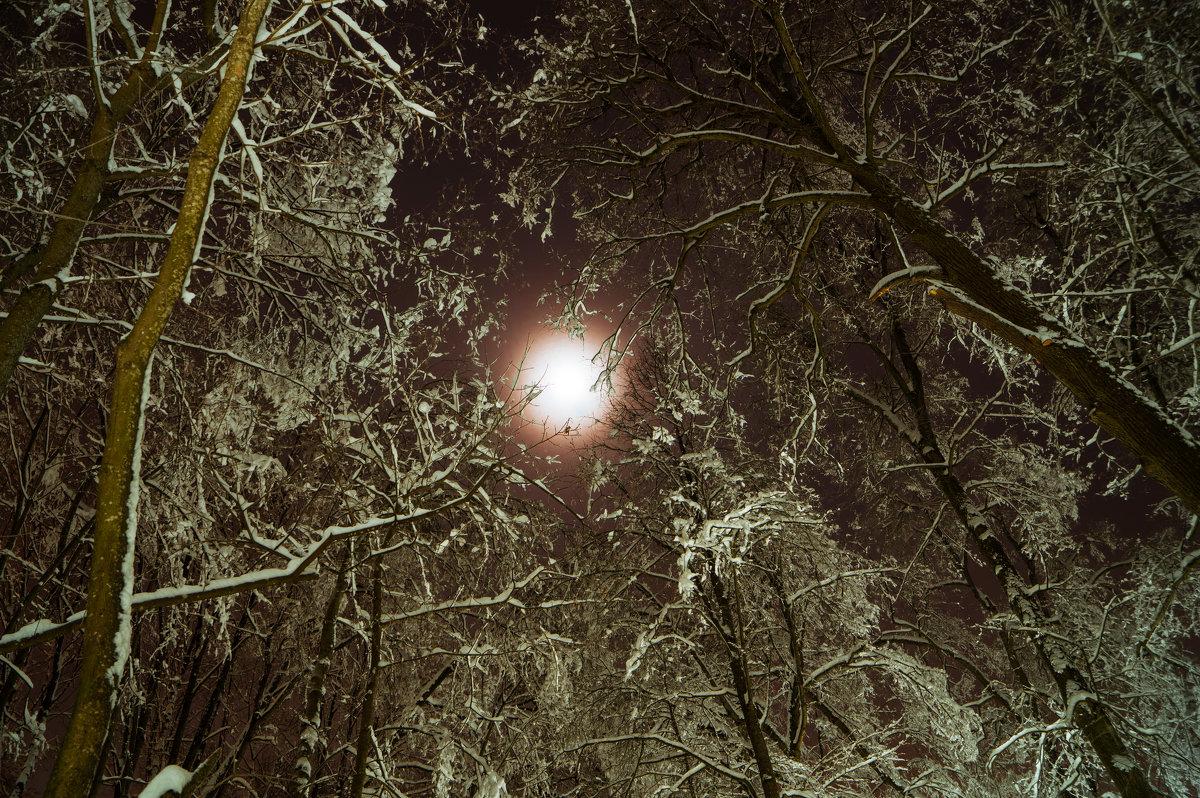 Ночь в лесу - Евгений Лебедь