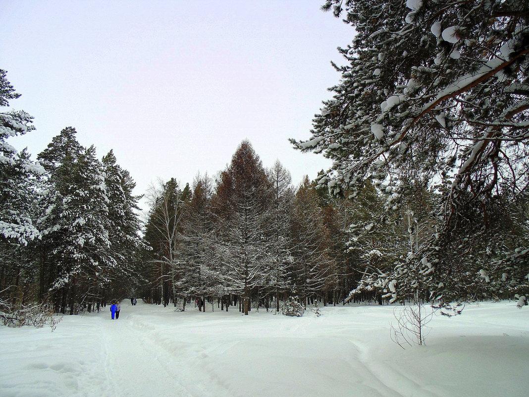Смешанный лес. - Мила Бовкун