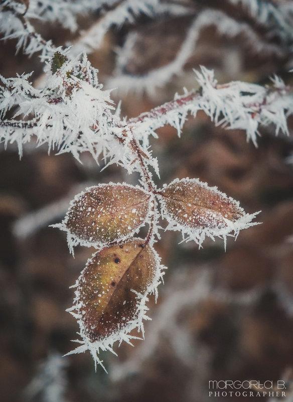 Снежные иголочки - Маргарита Б.