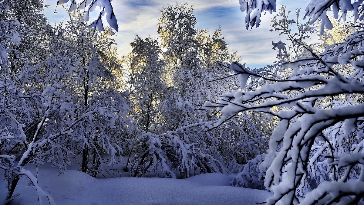 В гостях у Деда Мороза! - kolin marsh
