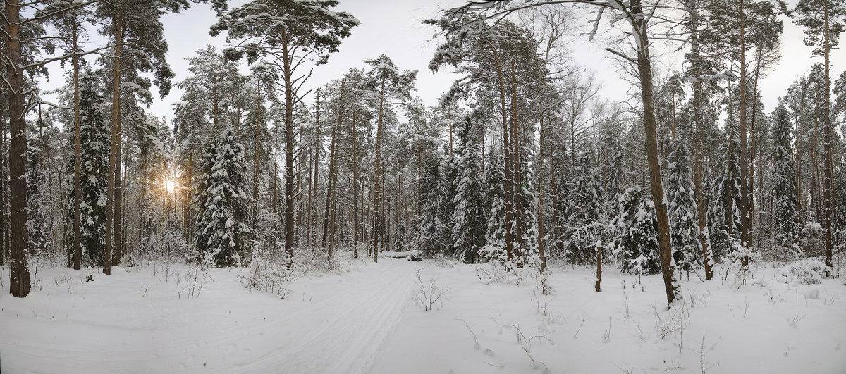 Русский лес - Mikhail .