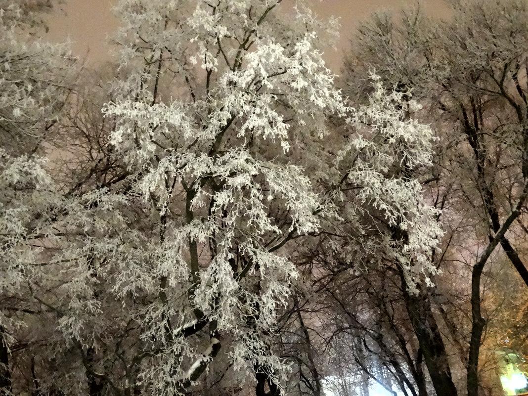 Вечер 1-го января 2017г. - Тамара (st.tamara)